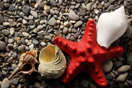 seastar: Seastar and seashells on pebbles