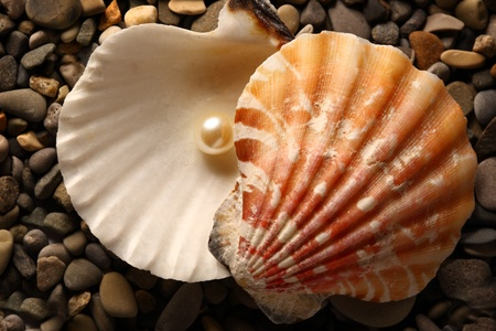 White pearl in seashell on pebbles photo
