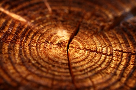 annual ring annual ring: Wooden background with cracked annual growth ring Stock Photo