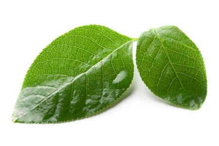wet leaf: Leaf isolated on white background Stock Photo
