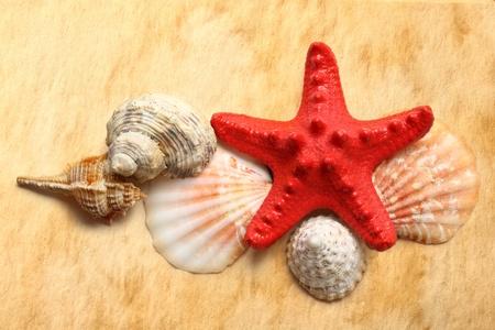 seastar: Seastar and seashells on stained paper Stock Photo