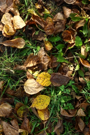 floor covering: Autumn foliage on green grass