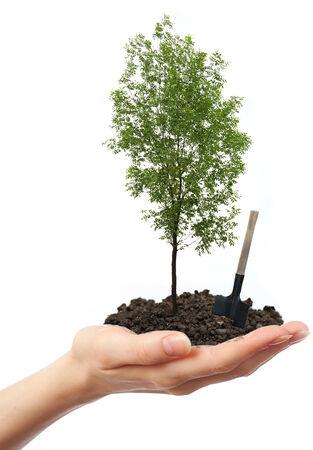 ash tree: Verde frassino in mano con la pala