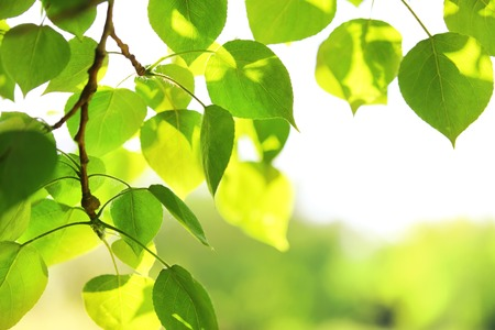 Green leaves on the sky background