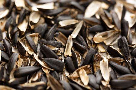 husks: Sunflower seed husks on the white background
