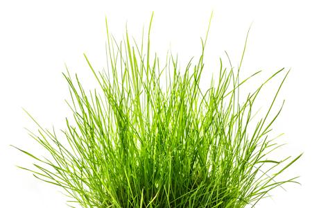 Patch de l'herbe verte fraîche sur blanc Banque d'images - 36799275