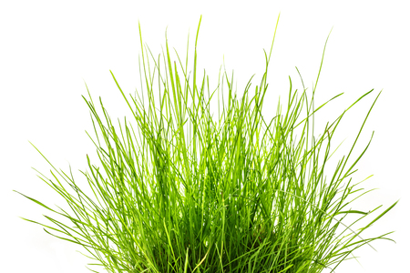 Patch van vers groen gras op wit Stockfoto