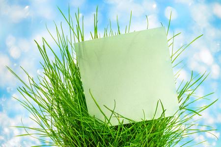 Blank green sticker in fresh green grass photo