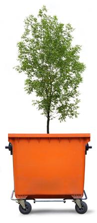 ash tree: Blank cassonetto con frassino verde su sfondo bianco
