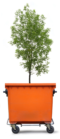 ash tree: Blank refuse bin with green ash tree on white background