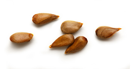 Dry apple seeds on the white background 스톡 콘텐츠