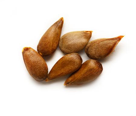 Dry apple seeds on the white background Standard-Bild