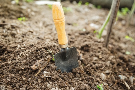 gardening tools: Soil with small shovel in summer day