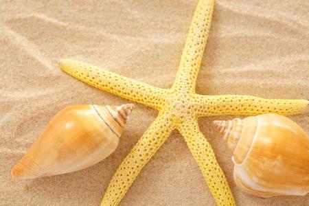 seastar: Fingerfish, seastar and seashells in sand closeup