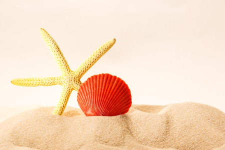 Sea shell and star in sand on white background