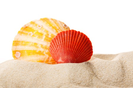 Sea shells in sand on white background