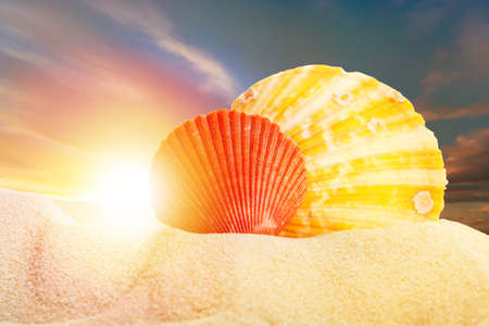 Sea shells in sand on sunset background