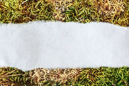 ragged: Ragged piece of paper on moss background