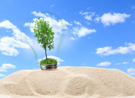 ash tree: Green ash tree inside lamp in sand on blue sky background