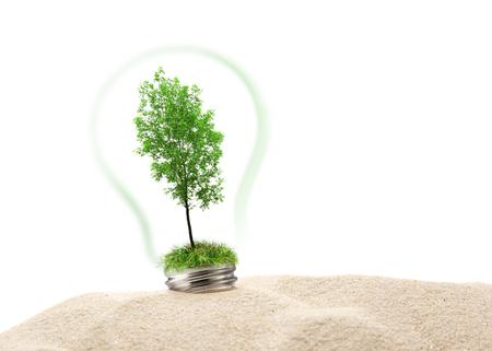 ash tree: Green ash tree inside lamp in sand Stock Photo