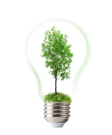 ash tree: Green ash tree inside lamp on white background