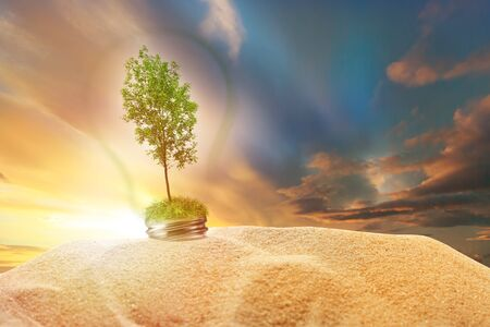 ash tree: Green ash tree inside lamp in sand on sunset sky background Stock Photo