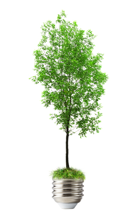 bulp: Green ash tree as lamp bulp on background Stock Photo