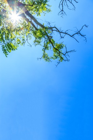 bright sky: Tree branches with green leaves on blue sky Stock Photo