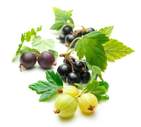 Fresh black currant with gooseberry on white background