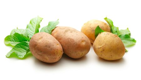Fresh whole potatoes with green haulm on white background