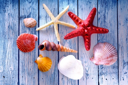 Collection of sea shells and stars in closeup Stock Photo