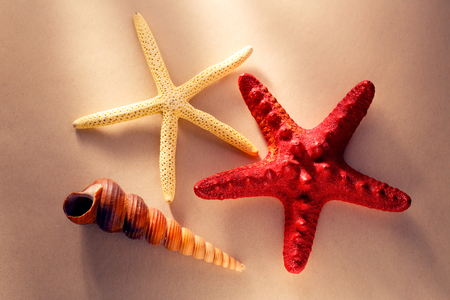 Sea shell and stars in light closeup Stock Photo