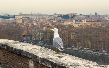 Seagull against rome city view Stok Fotoğraf