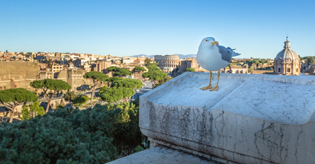 Seagull against scenic view of Rome with Colosseum and Roman Forum
