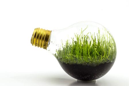 Glühbirnen mit darin gepflanzten Pflanzen sind eine sinnvolle Lösung für das Recycling von verbrannten Glühbirnen. Standard-Bild - 96213338