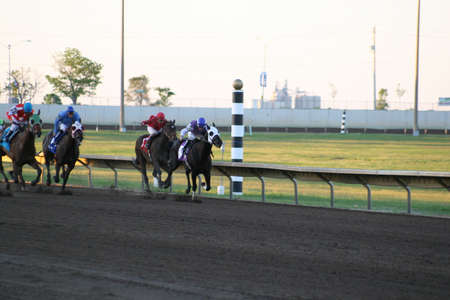 dueling: Thoroughbreds fighting for the Win