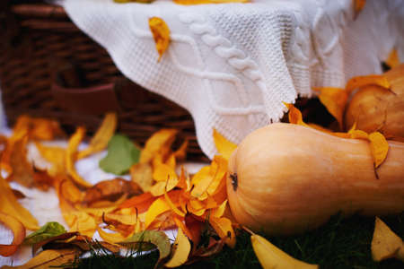 a place of life: Orange pumpkins lying on the grass surrounded by yellow leaves on a background of knitted blankets. Autumn still life with place for text Stock Photo