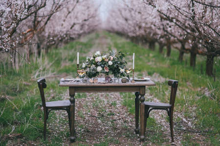 Decorated ceremonial table in the victorian style in apricot garden. A wedding in spring garden. The effect of film photography Фото со стока