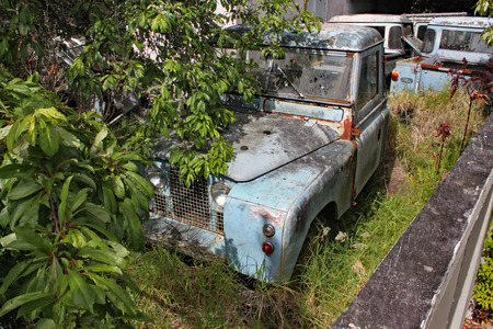 A collection of old rusty Land Rover Defenders in a garden with trees and bushes growing around them
