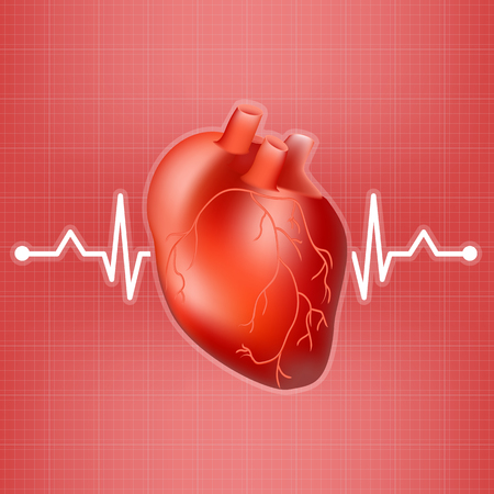 systole: Human Heart And Heart Beat On Ekg Isolated On A Background. Realistic Vector Illustration.