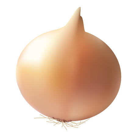 Fresh Onion Bulb Isolated On A White Background. Realistic Vector Illustration. Illustration