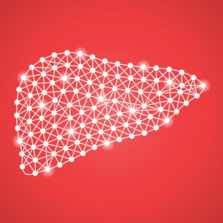 赤の背景に分離したひと肝臓。ベクトル Illustration.Hepatology。クリエイティブ ・医療コンセプト