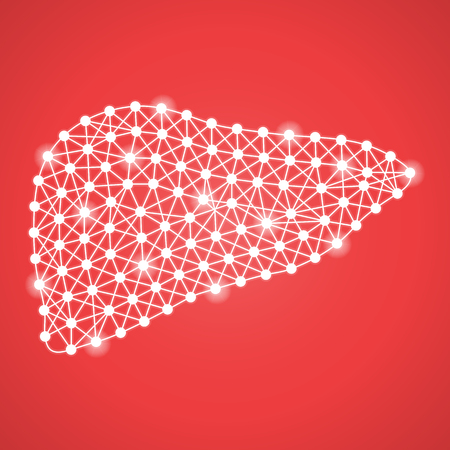 Hígado humano aislado en un fondo rojo. Ilustración del vector. Hepatología. Concepto médico creativo