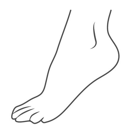 Pied Humain, Icône De La Jambe Isolé Sur Un Fond Blanc. Illustration vectorielle. Orthopédie, Concept d'organes. Vecteurs