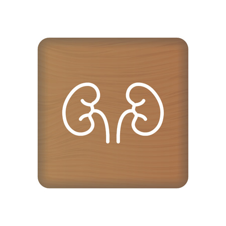 Human Kidney Icon. An Internal Organ Vector. Human Anatomy Illustration. Sign Symbol For Medical Presentation On Wooden Blocks Isolated On A White Background. Vector Illustration. Healthcare Concept. Ilustração