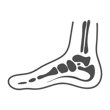 Medial Foot Anatomy Isolated On A White Background. Vector Illustration. Orthopedics, Organs Concept.