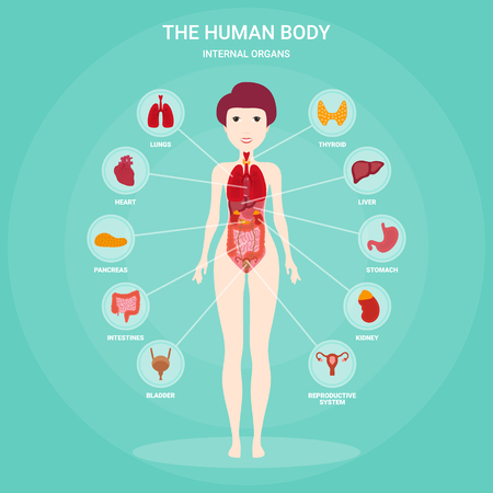 Human anatomy infographic elements with set of internal organs isolated and placed in female body. Woman reproductive organs with girl silhouette and icons around. Vector illustration