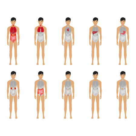 Main 12 human male body organ systems flat educative anatomy physiology front view flashcards poster vector illustration, eps 10