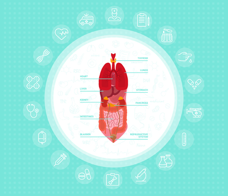 Cartoon human body organs concept with stomach lungs kidneys heart liver intestine reproductive system, vector illustration. Eps 10