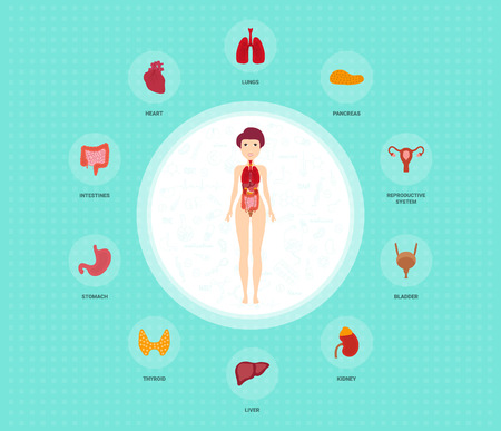 Human anatomy infographic elements with set of internal organs placed in female body. Woman reproductive organs with girl silhouette and icons around. Vector illustration